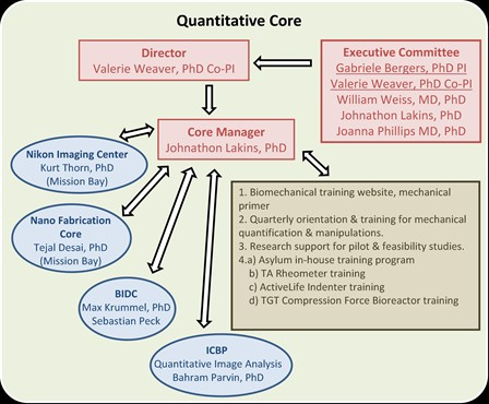 Quantative Core Picture